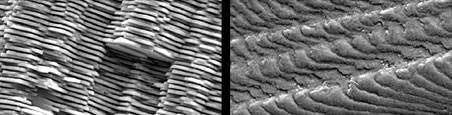 La struttura a piani sfalsati della corazza della haliotis