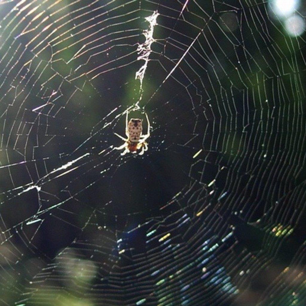 spider-web_flickr