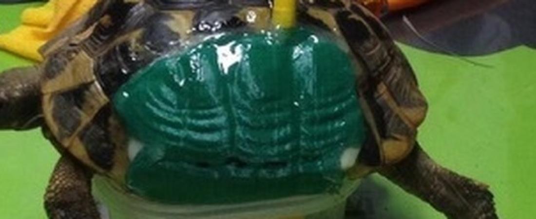 Dall'Italia il secondo caso al mondo di guscio di tartaruga stampato in 3D