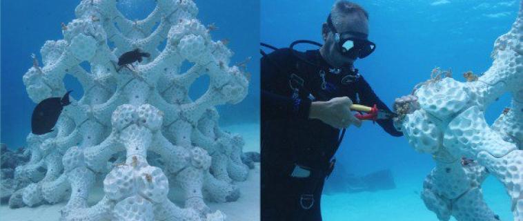 La stampa 3D in ceramica per ricostruire le barriere coralline