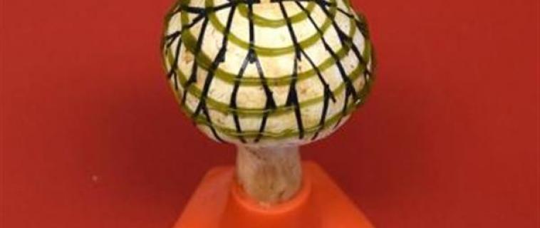 Funghi e cianobatteri stampati in 3D per generare elettricità