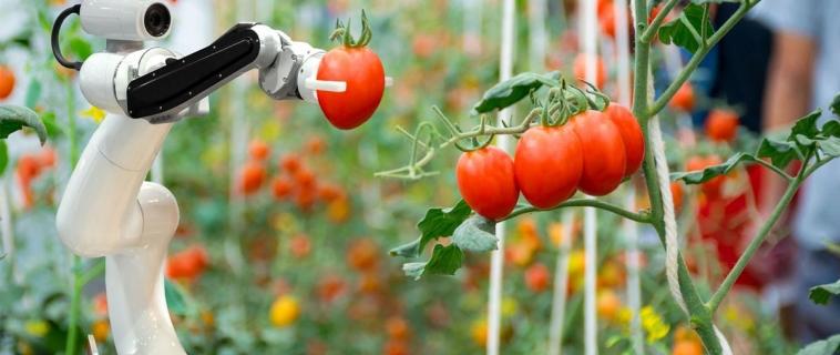 Agri-robot: la rivoluzione dell'agricoltura parte dall'intelligenza artificiale