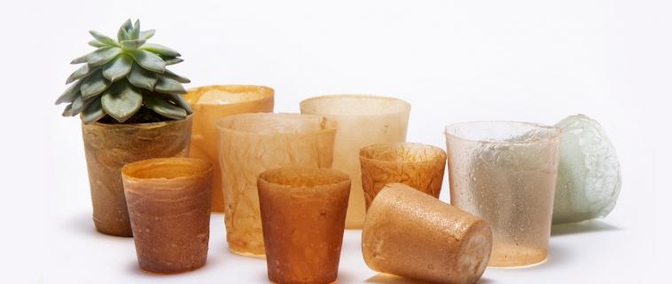 Shellworks trasforma gusci di aragoste scartate in oggetti bioplastici riciclabili