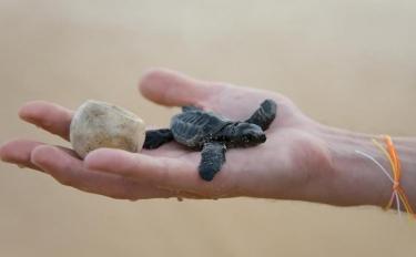 Uova antifurto stampate in 3D per salvare le tartarughe marine